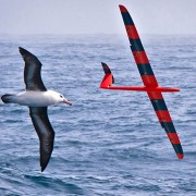 Physicists Train Robotic Gliders to Soar like Birds