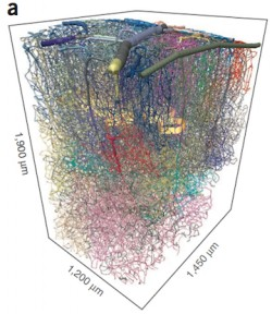 Three Generations of UC San Diego Physicists Plumb the Microvasculature of the Mammalian Brain